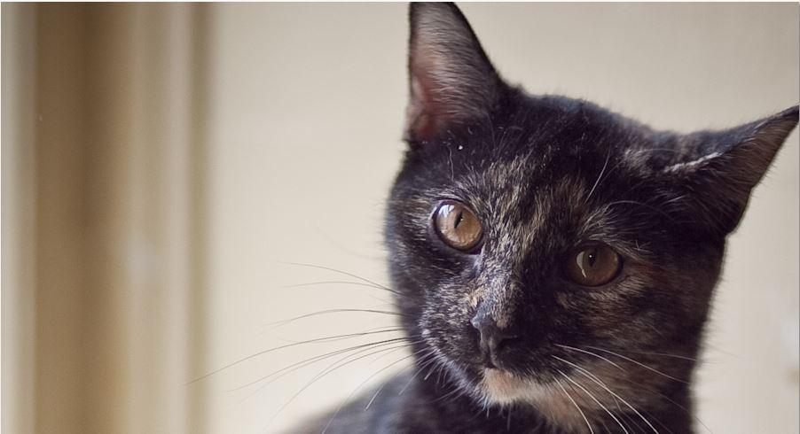 Ottawa Stray Cat Spaying Program